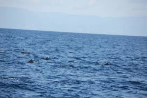 So many dolphins! We wish we could've swum with them.