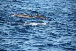 bohol dolphins 4