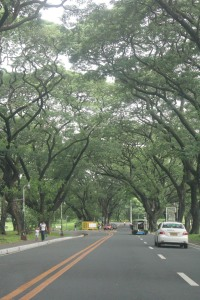 love the trees :)