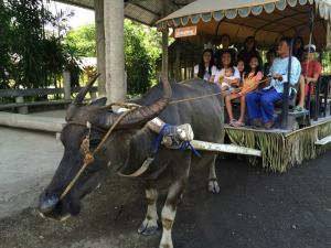 Luningning was our carabao. We were amazed at her strength. She carried us, our stuff, and the musicians who played nice Filipino music for us. :)