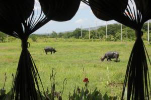 A field we passed during our carabao ride. :)