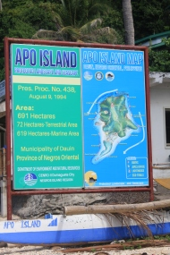 Our Apo Island Adventure (Persistence Pays Off! 2)
