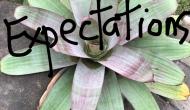 Low Expectation, HighAppreciation